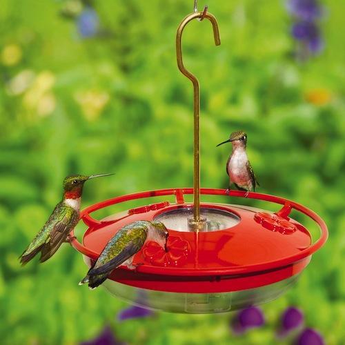 Happy Hummingbirds- Consejos para elegir el alimentador de colibrí perfecto | Droll Yankees