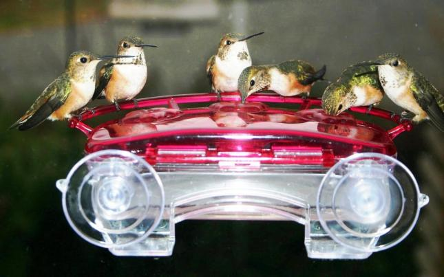 Walter's Hummers